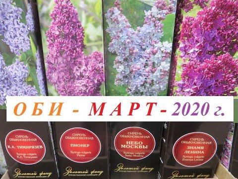 ОБИ - садовый рай, март 2020 г. Новые поступления. Сорт, описание и АКЦИИ!