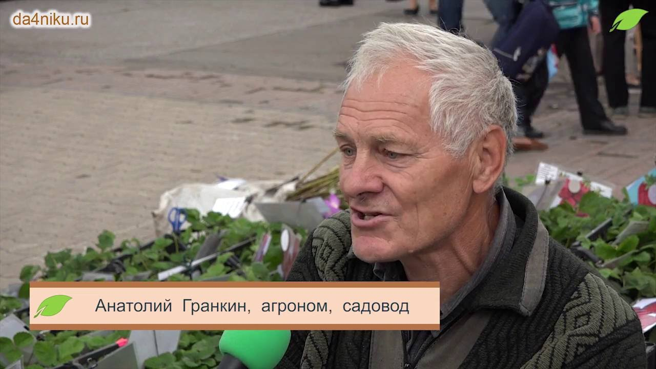 Анатолий гранкин клубника