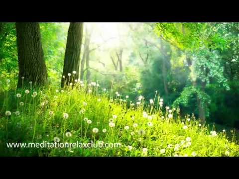 1 Hour Yoga Music Meditation Background Music: Relaxing Instrumental Music, Sleep Therapy