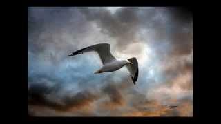"""""""Chim báo bão""""  Etudio_ Eguado. Guitar: Đức Hiển"""