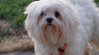 Top 5 Dog Breeds For Allergic Dog Lovers