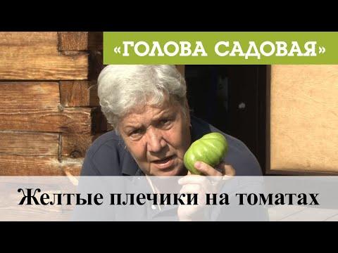 Голова садовая - Желтые плечики на томатах