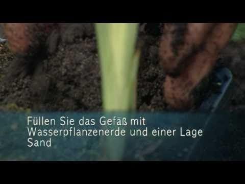 Berühmt Sumpf- und Wasserpflanzen richtig einsetzen - YouTube @IK_49