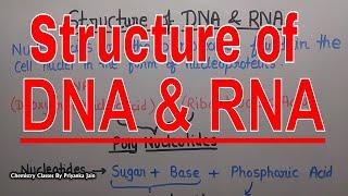Struture of DNA & RNA [Nucleic acids]