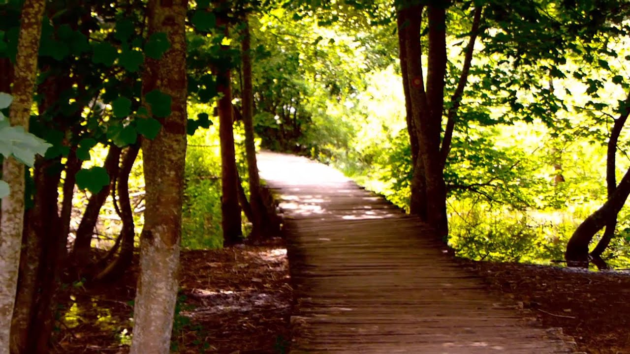 #9730, Camino de madera en medio del bosque [Efecto