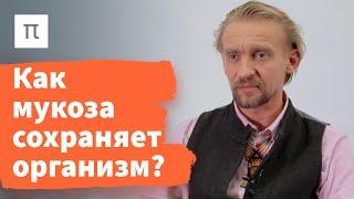 Микробы кишечника и здоровье — Дмитрий Алексеев / ПостНаука