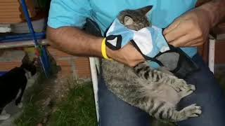 Cats getting dressed..funny video, viral video,  cats videos