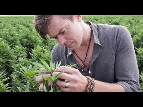 Charlotte's Web Hemp Extract Founder Talks Hemp Farming in Colorado