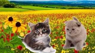 Животные для самых маленьких.Как говорят и выглядят домашние животные?
