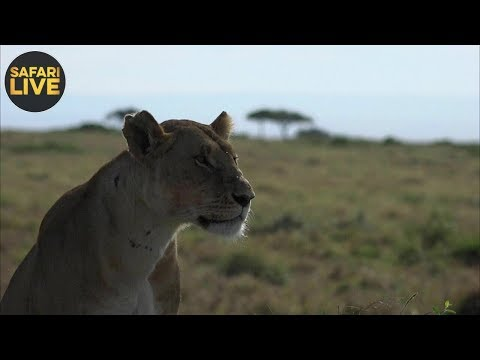 safariLIVE- Sunrise Safari - September 27, 2018