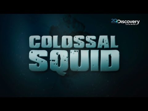 Discovering A Rare Giant Squid  | Colossal Squid