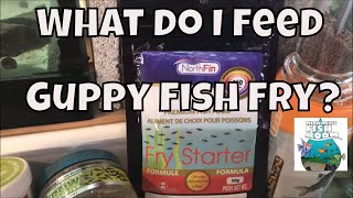 HOW TO FEED GUPPY FRY
