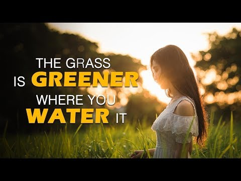 The Grass Is Greener Where You Water It | by Jay Shetty