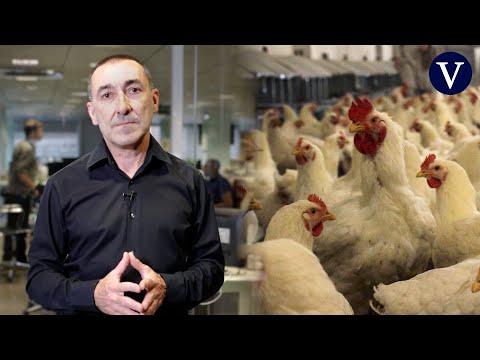 ¿Qué peligro tiene el virus de gripe aviar H10N3 descubierto en China? | Josep Corbella
