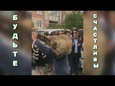 Армянский танец с бараном