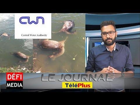 Le Journal TéléPlus : les cadavres de quatre cerfs découverts à La Nicolière, la CWA rassure
