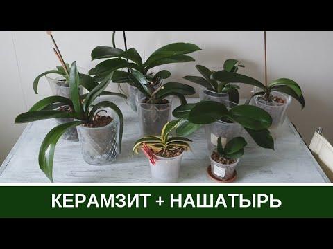 Орхидеи в Керамзите * Наращивание корней Нашатырным Спиртом