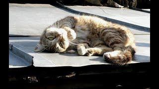 На крыше лежал приклеенный кот, над которым кружила стая воронов. Птицы безжалостно клевали животное