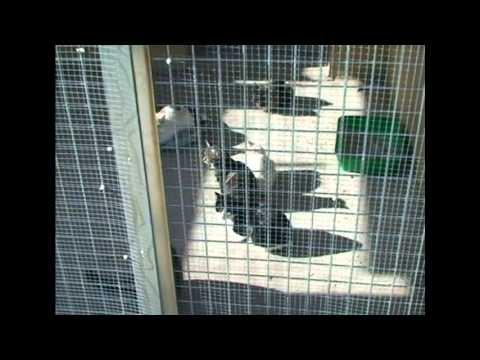 Centro De Protección Animal Del Sur De Madrid