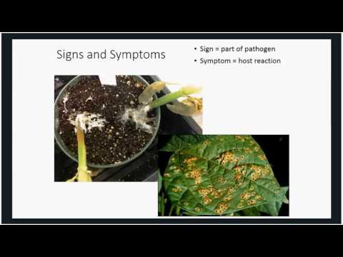Disease Management in Organic Crops for the Small Grower  We