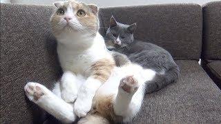 子猫 かわいい