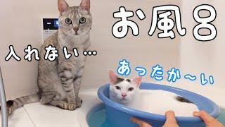 暖かくなってもお風呂大好きな猫たちが大集合!