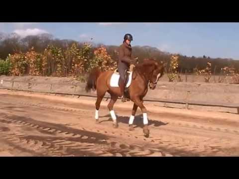 Talentvol paard te koop doovi for Paard aan huis te koop