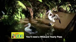 Cairns Tropical Zoo TVC - Wildlife Walkabout
