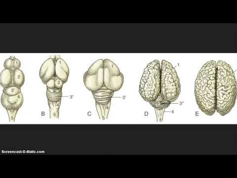 Reptilians are Brain Parasites from Outerspace?