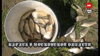 Ловля Карася на удочку в Подмосковье! Рыбалка в июне.