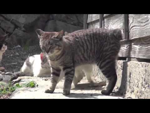 Isla de los gatos (Aoshima, Japón)