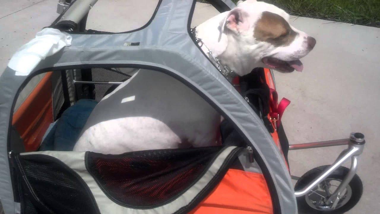 Convert Wagon To Dog Cart