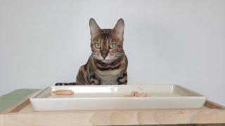고양이 닭가슴살 먹방 리뷰 별점까지