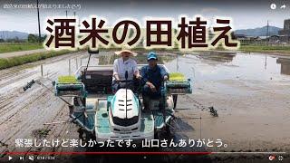 酒造米の田植えが始まりました(^-^)