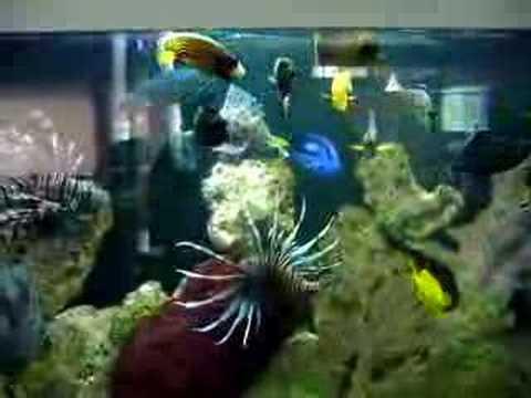 Peceras con peces youtube for Peceras con peces