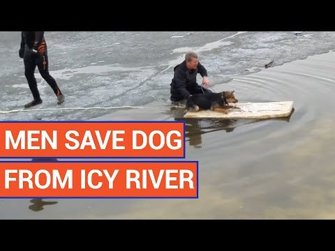 Man Rescues Dog from Icy River Video 2016 | Daily Heart Beat
