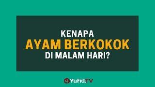 Download Video Kenapa Ayam Berkokok di Malam Hari? - Poster Dakwah Yufid TV MP3 3GP MP4