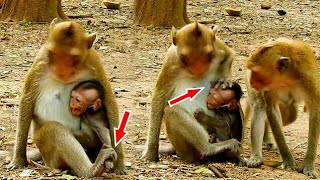 Mom Strong Hit To Baby Monkey, Baby Monkey Cry Loudly