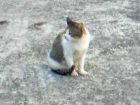Cat @ Guang Ming Shan Pu Jue Si...