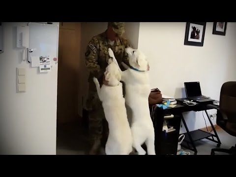 Dogs WELCOMING SOLDIERS HOME ★ Soldiers Seeing Their Dogs After Long Time [Funny Pets]