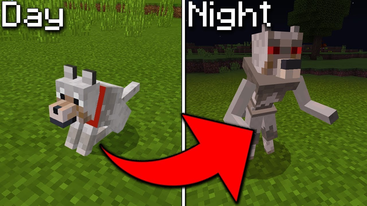 How To Turn a Wolf Into a Werewolf in Minecraft Pocket Edition (Mythic Mobs Addon)