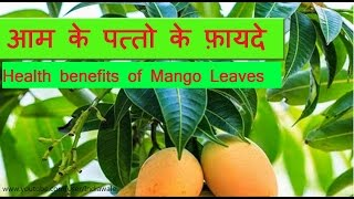 आम के पत्तो के फ़ायदे | health benefits of mango leaves for diabetes, Heart & Stomach
