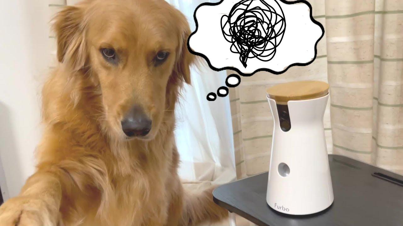 愛犬のお留守番観察してたら複雑な感情になった・・・w