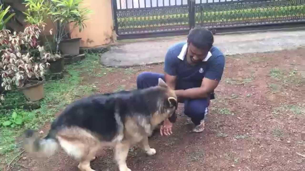 German Shepherd In Kerala Youtube