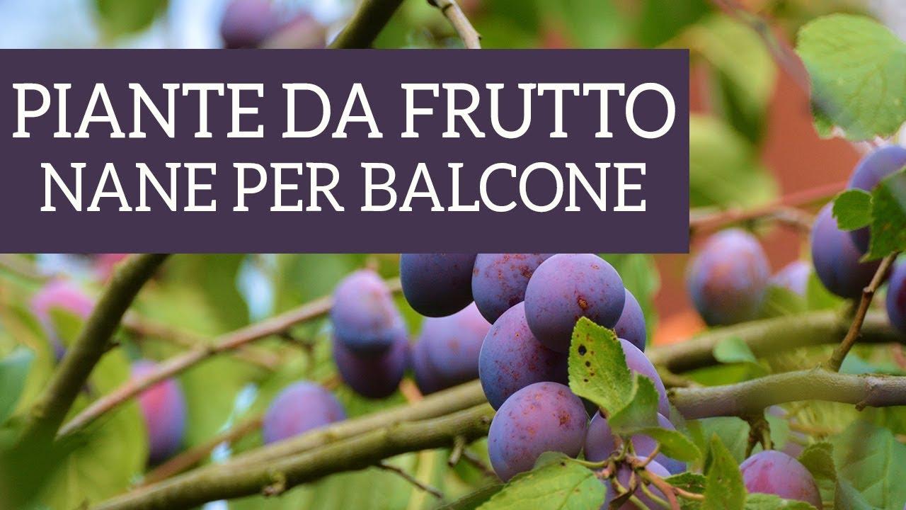 Alberi Nani Da Giardino dwarf fruit plants for your balcony? it's possible!
