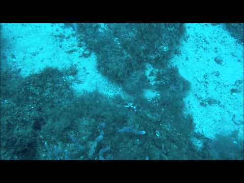 Lionfish King with hind scamp lions