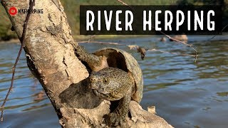 River Herping: Rattlesnake, Salamanders, and Turtles in Trees!!!