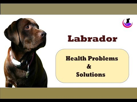 Labrador: Dog Health Problems & Solutions ( in Hindi )