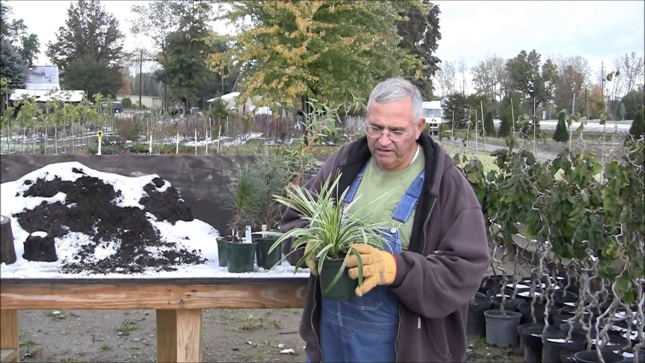 mikes backyard nursery part 16 a simple way to root plants from