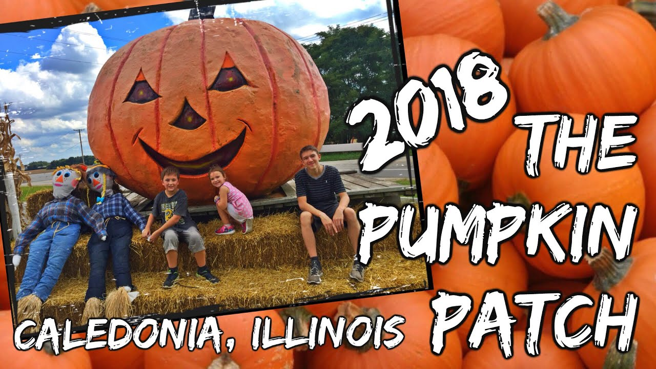 the great pumpkin patch caledonia illinois